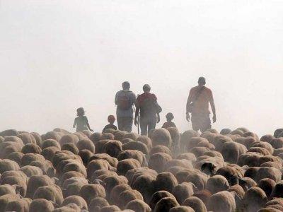 Cal Serrats: La mañana del pastor