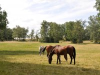 Horses grazing in La Granja