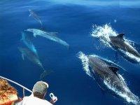 Rodeados de delfines