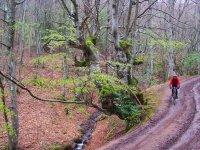 Atravesando bosques