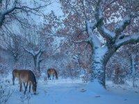 paleolitico en invierno