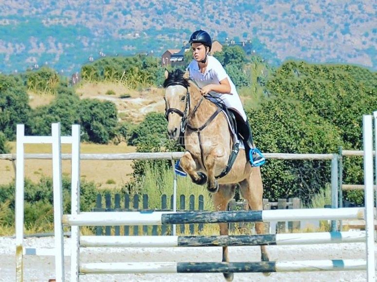 Salto de obstáculos con el caballo