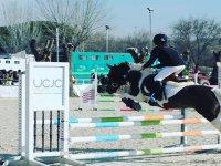 Saltando con el caballo los obstáculos