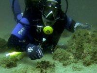 Rozando el fondo del mar