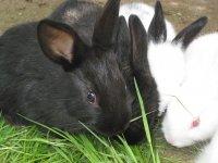 Conejos de la granja escuela