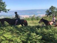 Sobre los caballos en ruta