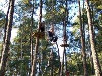 商业刺激的树木巡回赛