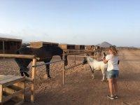 Fotografiando al pony y al caballo
