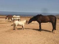 Pony y caballo dandose mimos