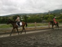 Horse riding in the canary track