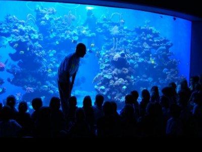 Palma Aquarium Campamentos Urbanos