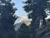内华达山脉在树林中