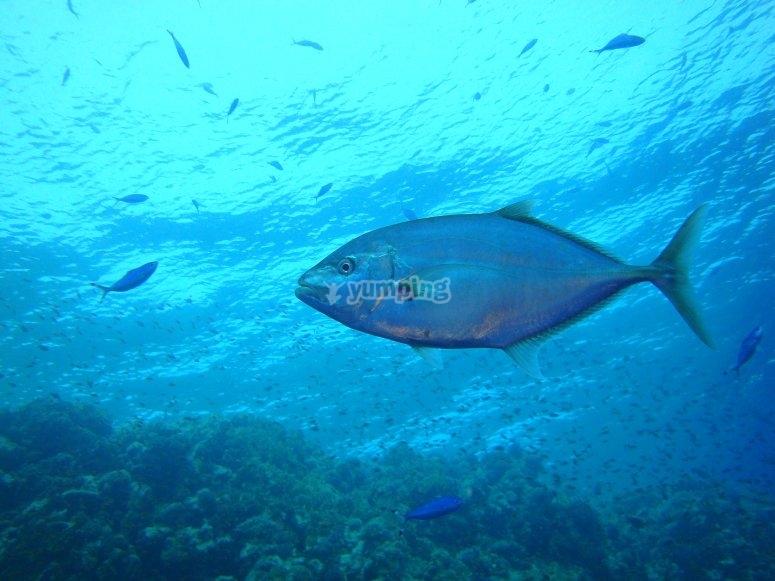 Buceando entre peces