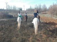 Sobre los caballos en el campo
