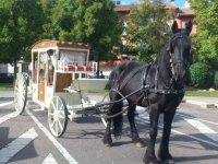 Carriage for events