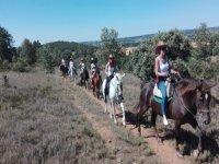 Horseback riding through the field