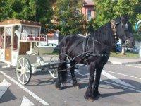 Black horse-drawn carriage