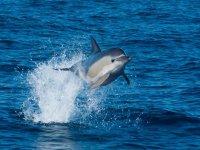 跳跃的海豚
