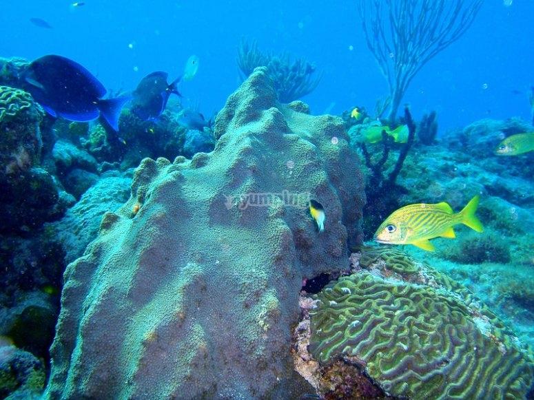 尼哈尔的海洋生物