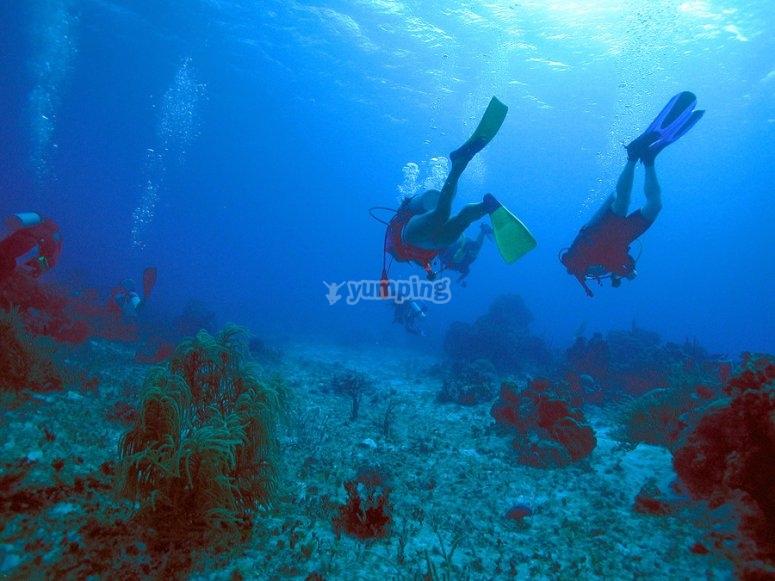 尼哈尔潜水