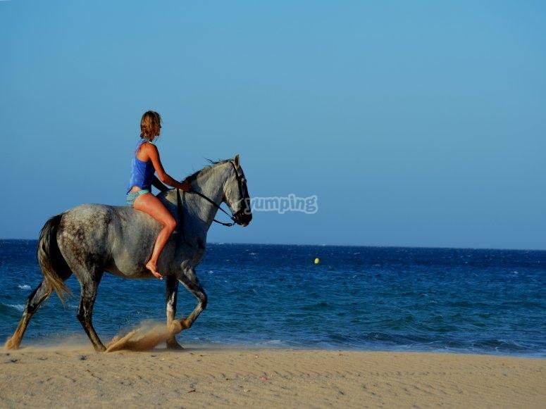 骑马慢跑在Bolonia