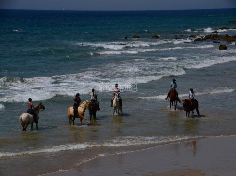 骑马游览蓬塔帕洛玛海滩