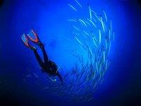 Immersioni nuotate con i pesci