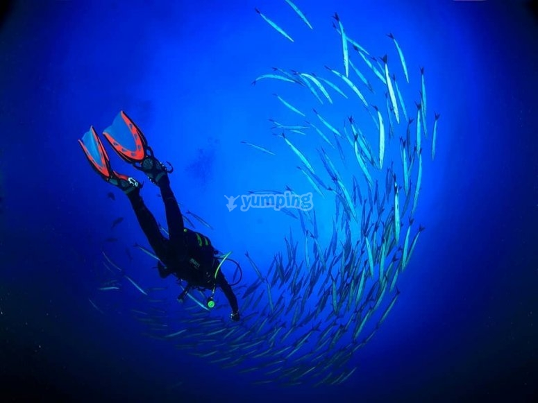 在鱼群之间潜水