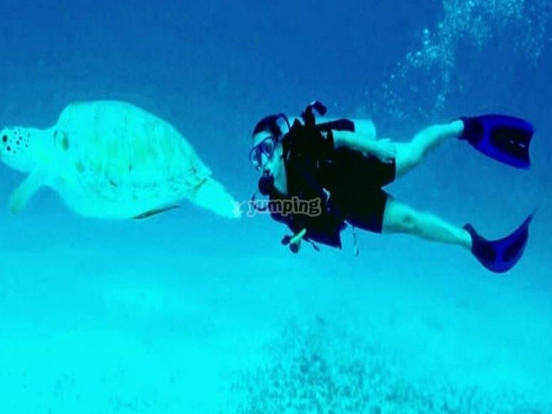 在海龟旁边潜水