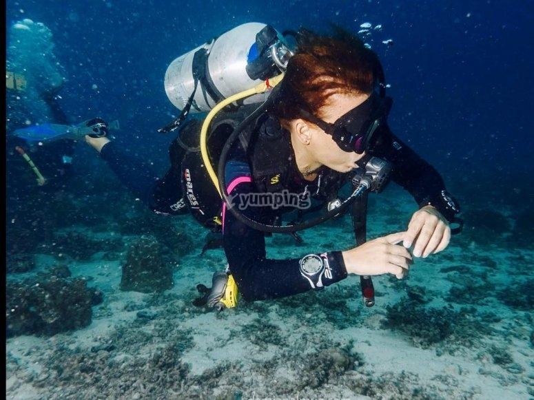 通过潜水发现水下生物