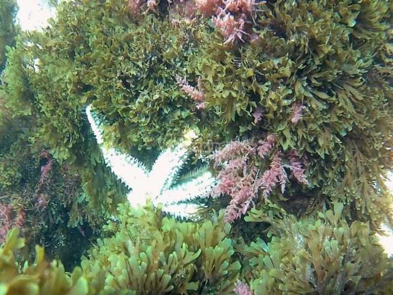 潜水时发现海洋物种