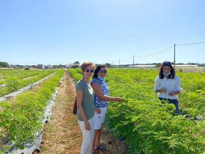 Ecotour for Moringa crops and Conil breakfast