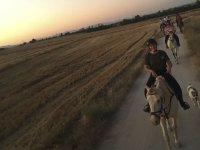 沿着Jarama河骑马1小时
