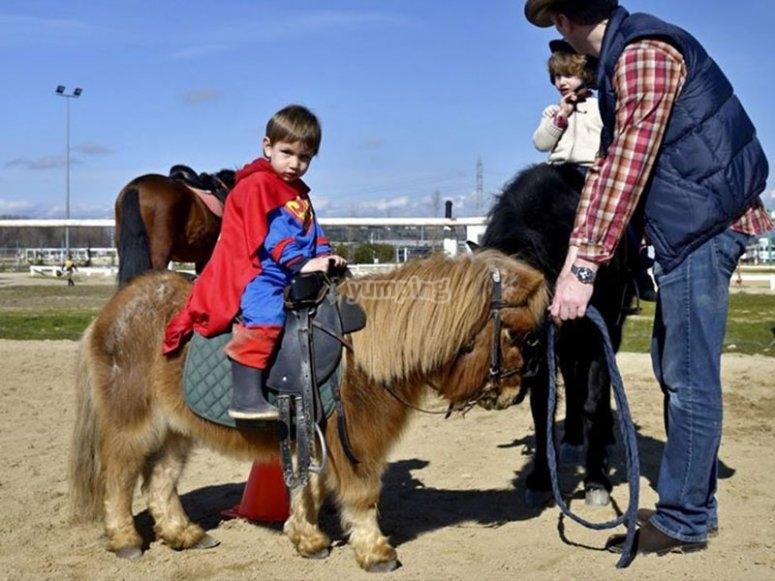 与小马一起玩耍