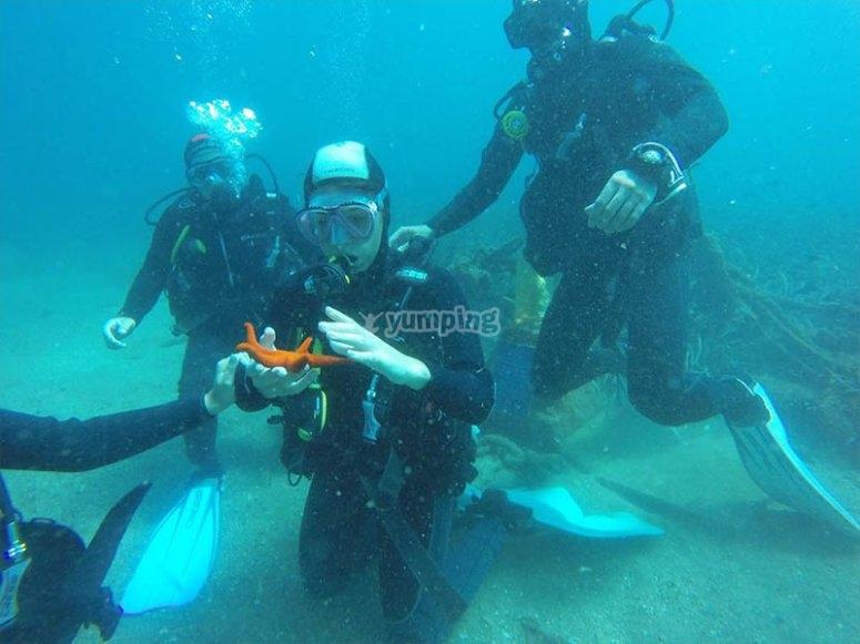 Descubriendo la vida marina de Aguadulce