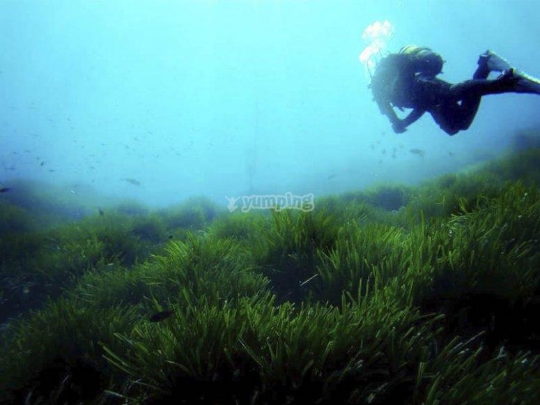 Buceando por las praderas marinas de la costa almeriense