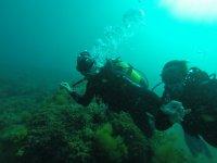 我们的潜水中心的潜水经验蟹海底潜水的做法
