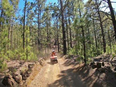 Ruta en quad por bosque de pinos en Tenerife 3 h