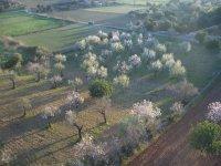 Aerial excursion in Mallorca