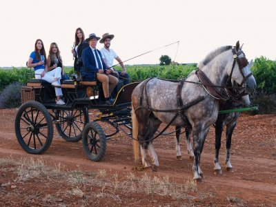 Wine tasting and carriage ride Casas Ibáñez 3 h