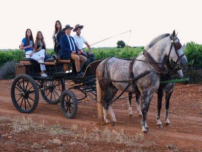 品尝葡萄酒和乘马车CasasIbáñez3小时