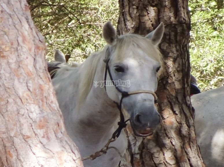 Horse among the trees