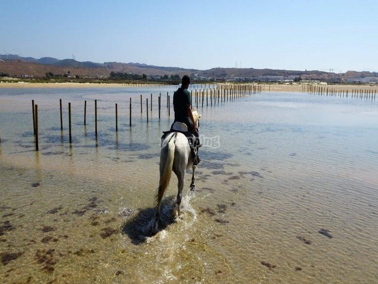 On horseback on the shore