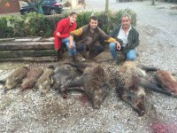 Family of wild boars