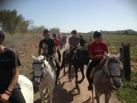 Horseback riding in two rows