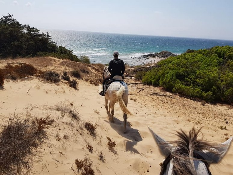 Through the dunes with the horse