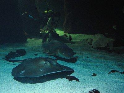 Buceo con tiburones en acuario en Lanzarote