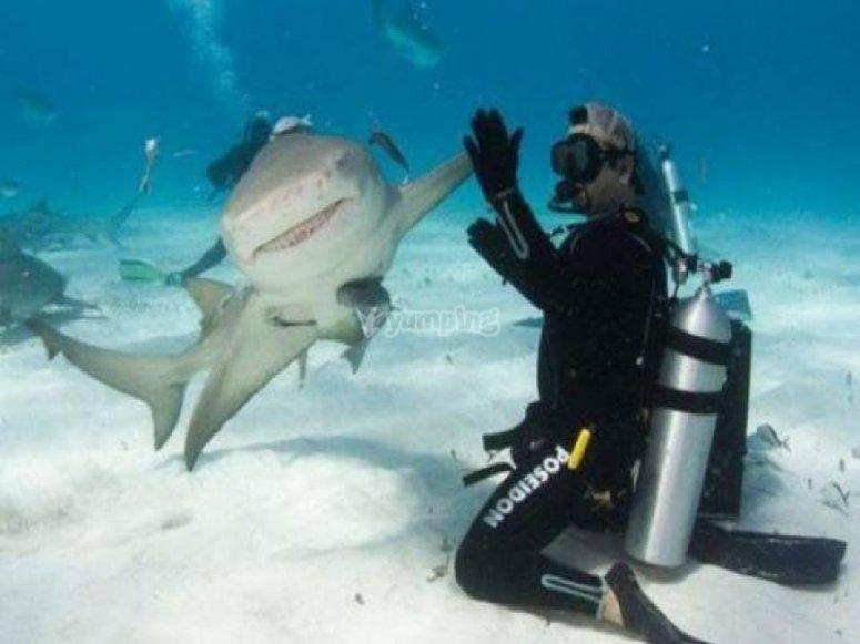 与鲨鱼潜水
