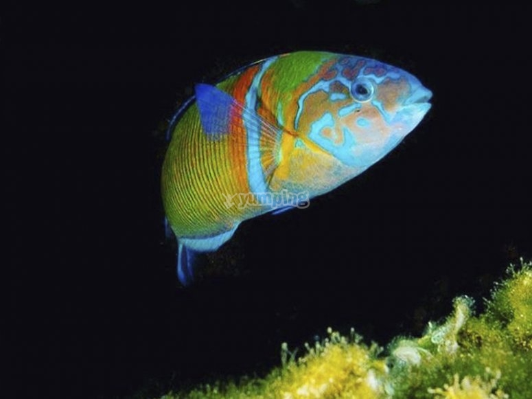 与绿鱼一起潜水