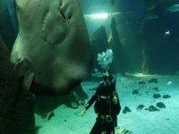 Buceo con tiburones con licencia en Costa Teguise